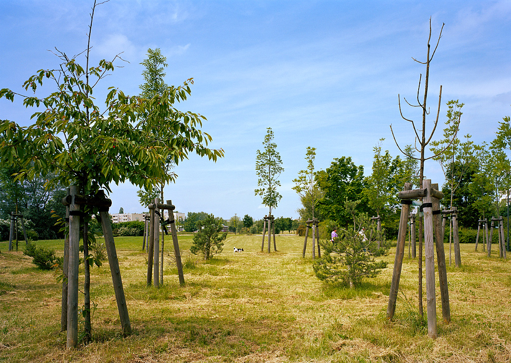 Trees Instead of Houses by Nikolaus Brade.